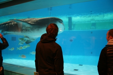 have you seen the whale shark?
