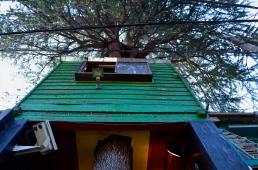 Treehouse 五三荘