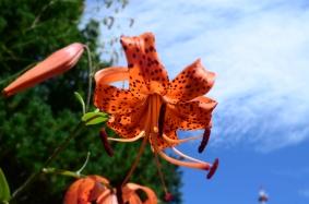 botanic garden sapporo