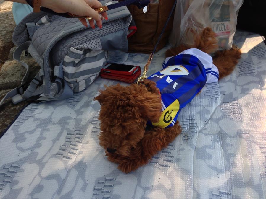 soccer dress for dogs