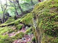 Hike, Mt. Yufu
