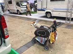 Doggie stroller
