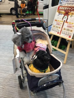 Another Doggie Stroller