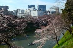 Chiyoda Sakura