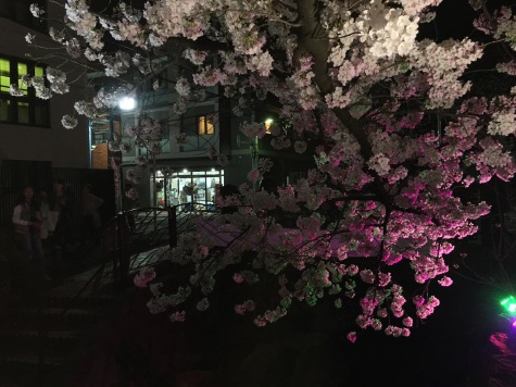 Hanami at night